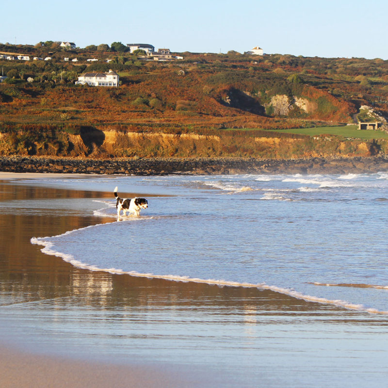 Dog friendly accommodation in St Ives, Cornwall by Portmeor Beach