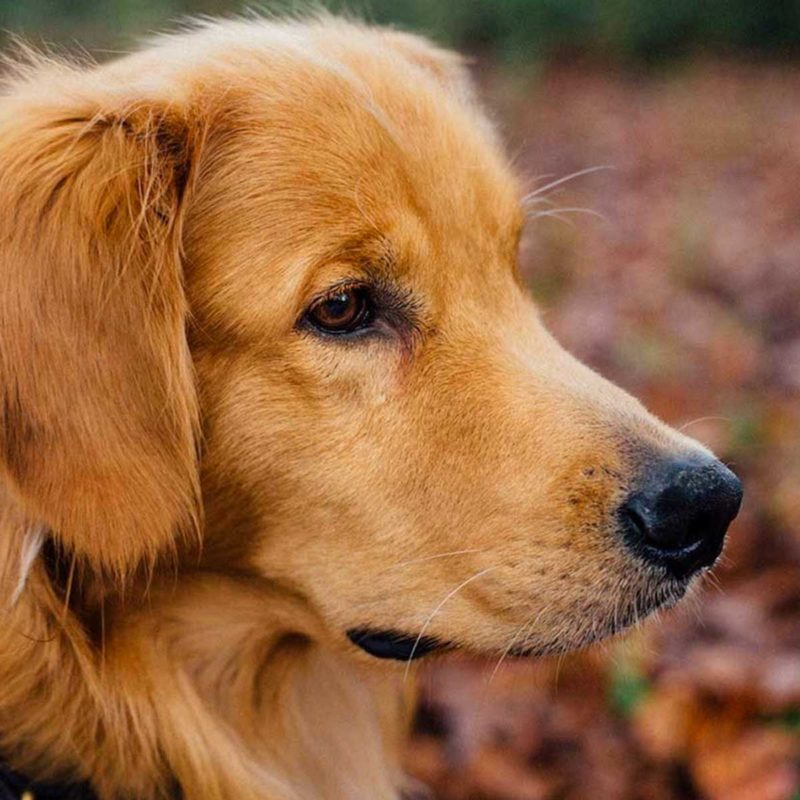 Dog Friendly Cornwall