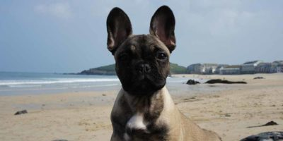Dog friendly accommodation in St Ives
