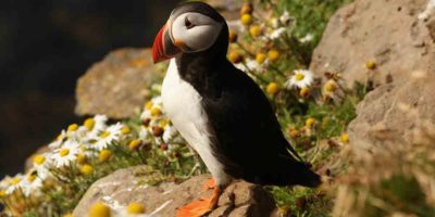 Winter bird watching in Cornwall during your luxury stay in St Ives.