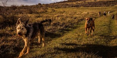 With our dog friendly accommodation journey by foot through Cornwall