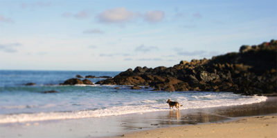 Dog Friendly Accomodation in St Ives