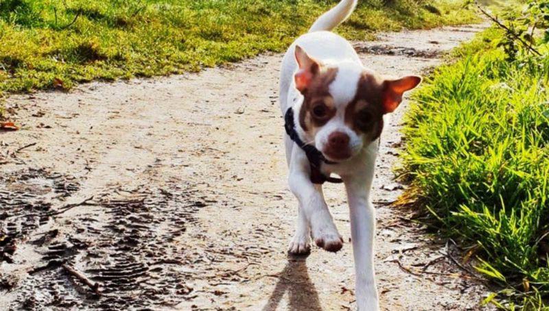Dog Friendly Walks in Cornwall