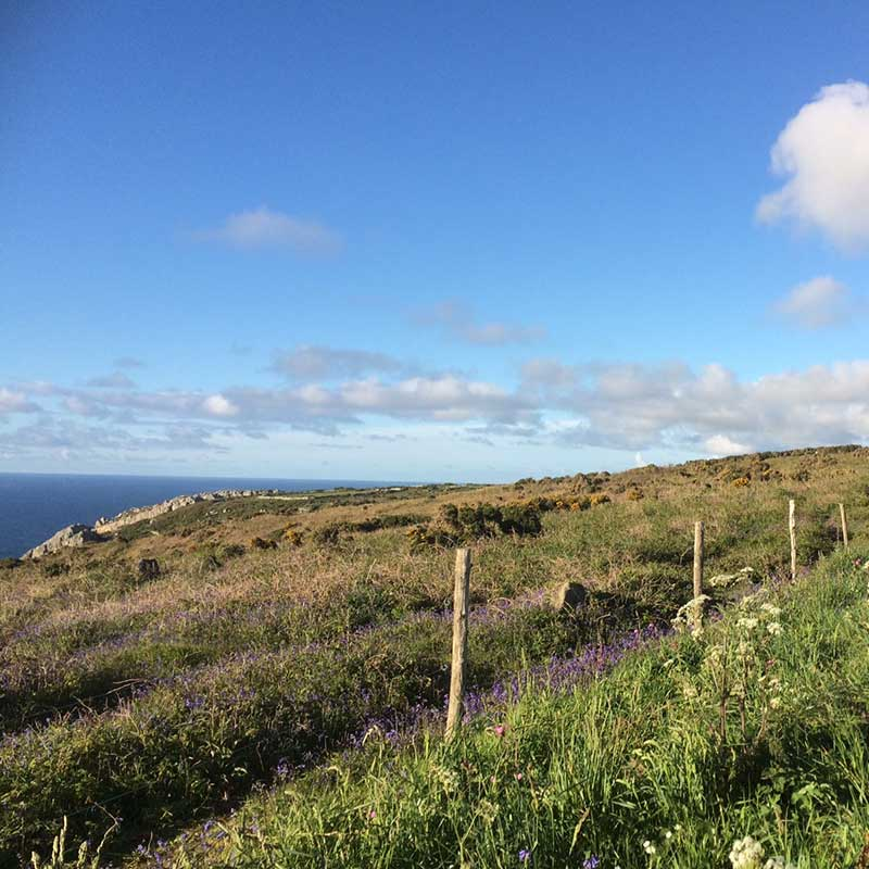 Dog Friendly Coastal Walks in Cornwall