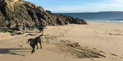 dog friendly coastal walks