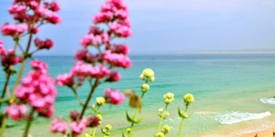 summer in st ives cottages