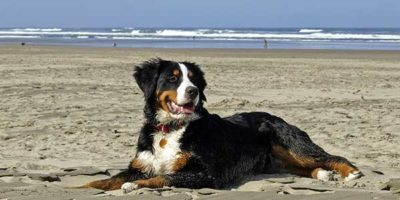 dog friendly cottages cornwall