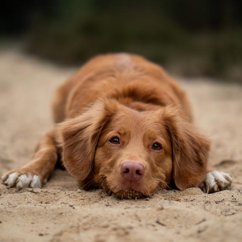 Dog Friendly St Ives Beach Restrictions