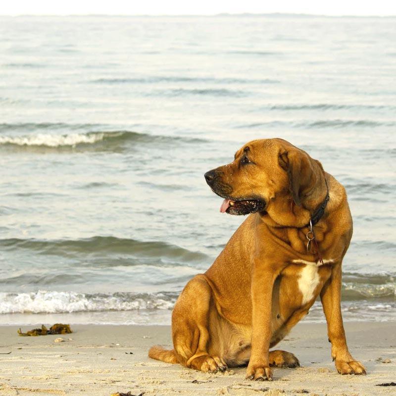 Dog Friendly St Ives Beach