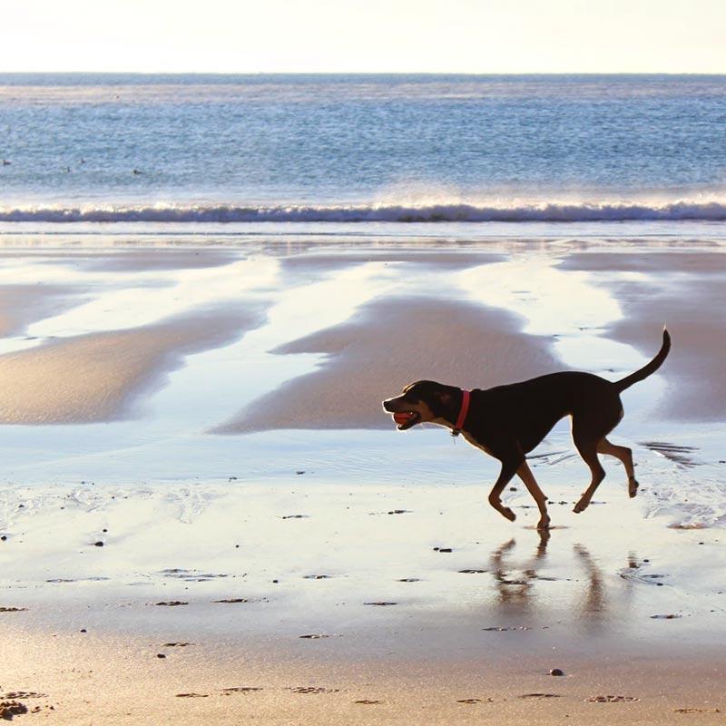 Dog Friendly St Ives Beach Walks
