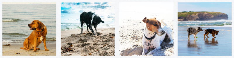 dog friendly holiday in st ives