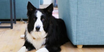 a dog in dog friendly cottage in St Ives