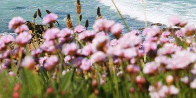 Flowers on Porthmeor Beach