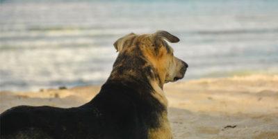 luxury dog friendly breaks in st ives march