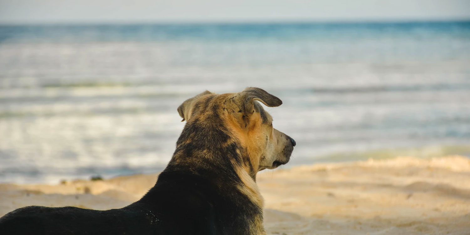 luxury dog friendly cottages in st ives