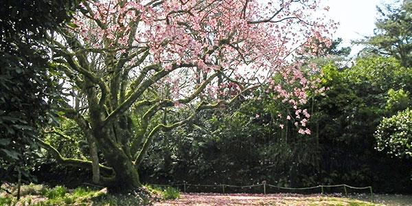 Trengwainton gardens in Cornwall