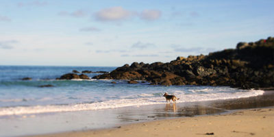 Dog on the beach in St Ives