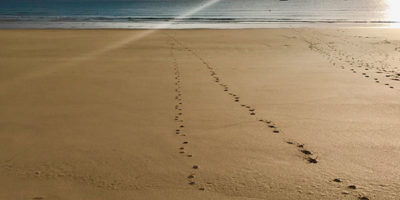 paw prints on the beach