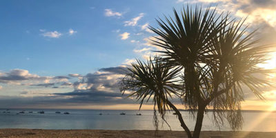 Palm trees on porthminster