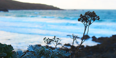 Winter in st ives 2