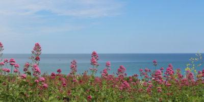 St Ives Coastal Walks in Spring